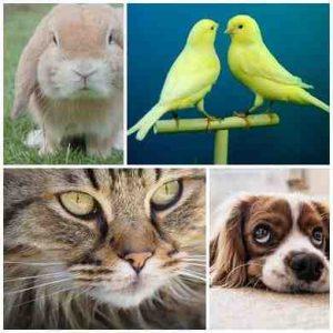 aplicaciones para mascotas