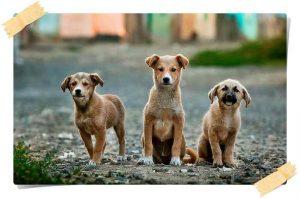 aplicaciones para perros