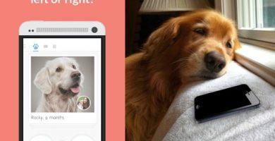 perro triste esperando un mach en twindog